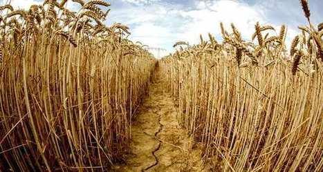 Les animaux et les plantes souffrent aussi de l'hiver trop doux | Alimentation Santé Environnement | Scoop.it