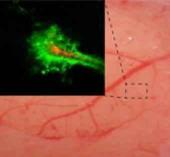 Researchers Design Nanoparticles Capable of Delivering Drugs ... | NanoBioPharmaceuticals | Scoop.it