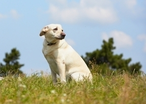 3 Ways to be Reunited With Your Lost Pet | Pet Health Tips | Scoop.it