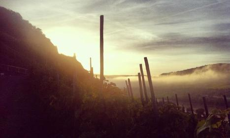 Mosel Harvest 2014 Primer | Wine website, Wine magazine...What's Hot Today on Wine Blogs? | Scoop.it
