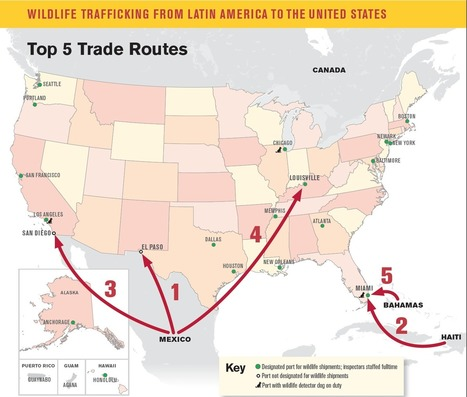 U.S. a major destination for trafficked Latin American wildlife | Chasse, Braconnage et Droits des Animaux | Scoop.it