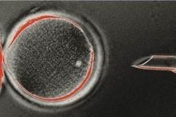 ¿Qué sigue después de la clonación | Clonación. Las células madre. | Scoop.it
