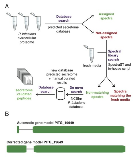 Molecular Cellular Proteomics: Profiling the secretome and extracellular proteome of the potato late blight pathogen Phytophthora infestans (2014) | Plant Pathogenomics | Scoop.it