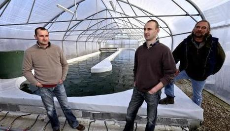 Et si, samedi, vous goûtiez la spiruline, une micro-algue cultivée à Frasnoy?   Biométhanisation   Scoop.it