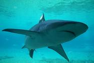 Whangarei Harbour becomes 'shark hunting ground' - New Zealand Herald | shark fishing | Scoop.it
