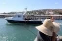 Courrier des lecteurs : Sea Shepherd écrit au Préfet de l'Ile de la Reunion | Coup d'œil sur La Réunion | Scoop.it