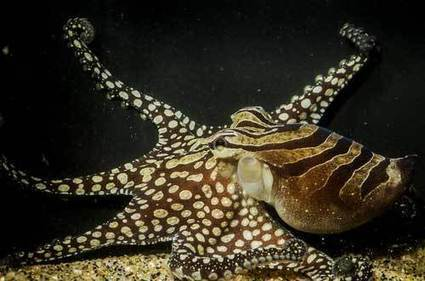 Friday Cephalopod: They're forming tribes! | Natural Fears | Scoop.it