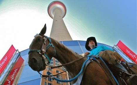 Spencer-the-horse takes it to the top | equine travel | Scoop.it