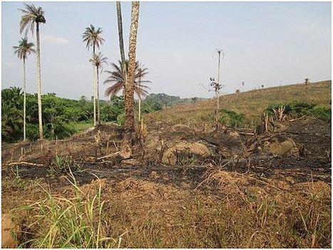 The Ebola-Deforestation Connection | Forests | Scoop.it