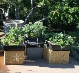 5 Things to Know about Aquaponics | Garden, Lifestyle | GroundReport.com – Latest World News & Opinions | garden farm | Scoop.it