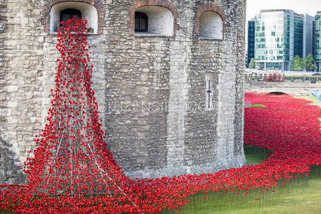 1000673-ceramic-poppies-planted-at-tower-of-london-to-mark-world-war-i-deaths-1-jpg.jpg (900x600 pixels) | Centenary of World War 1 | Scoop.it