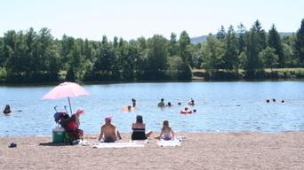 Des méduses dans un plan d'eau en Haute-Saône   méduses   Scoop.it