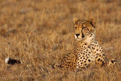 INDRI Ultimate Wildlife Tours » Tours » Destinations » Kenya Tanzania | Wildlife cruises | Scoop.it