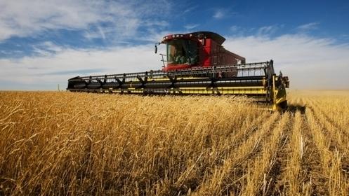 Agriculture: le Maroc booste les exportations françaises de blé tendre