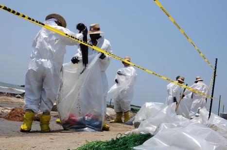 Hécatombe de dauphins et tortues depuis l'explosion de Deepwater Horizon | Toxique, soyons vigilant ! | Scoop.it