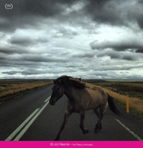 2013 iPhone Photography Awards: you won't believe your eyes   All things iPhoneography   Scoop.it