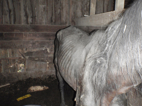 Sixteen months jail for brothers who neglected horses | Horses  around the world | Scoop.it
