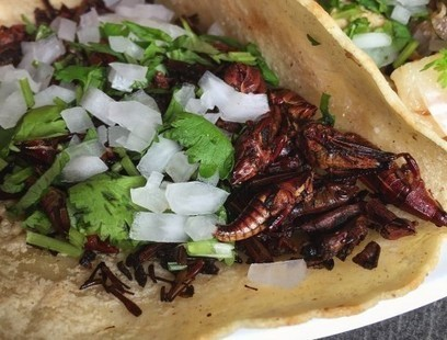 These grasshopper tacos are so good that eating them won't feel like a dare | Middays with Becky in DC | Scoop.it
