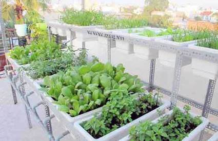 Vietnam: Urban agriculture grows amid pesticide fears | Future Making through Research and Development | Scoop.it
