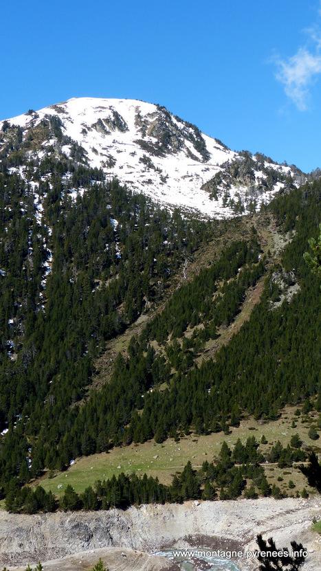 L'avalanche de poudreuse qui a dévasté la pinède en aval d'Estibère | Vallée d'Aure - Pyrénées | Scoop.it