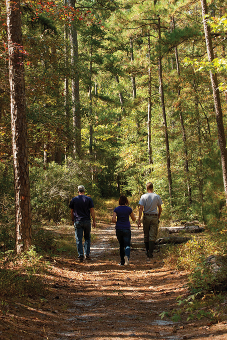 Bay Journal - Article: Small woodlots are a big deal to the Chesapeake's restoration | Suburban Land Trusts | Scoop.it