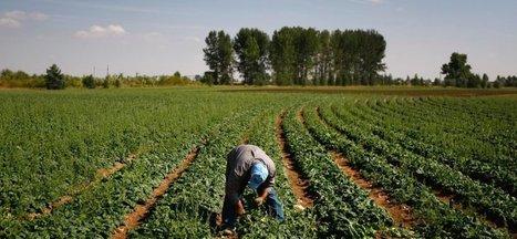 Comment le Big Data révolutionne l'agriculture Américaine ? | Agriculture | Scoop.it