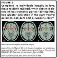 CNS Spectrums: Love and Attachment: The Psychobiology of Social Bonding | Social Neuroscience Advances | Scoop.it