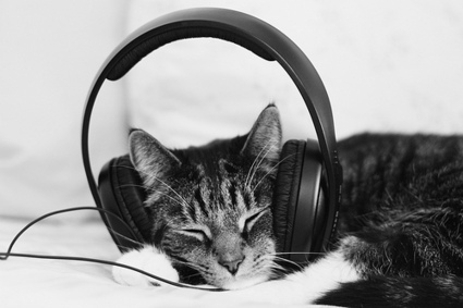 NuVibes - Vilela | Playlists | Scoop.it