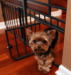 Carlson Large Design Studio Mini Tuffy Expandable Pet Gate with Pet Door - FREE SHIPPING! | Pressure Mounted Pet Gates | Scoop.it
