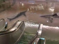 Fear not, there are no sharks swimming in your mall | Indigo Scuba | Scoop.it