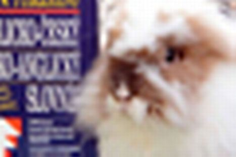 Jajo the Rabbit 'hired' as translator at Birmingham courts | Translation Business | Scoop.it