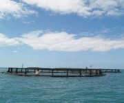 Ocean of trouble: Report warns of offshore fish farming dangers | Sustainable Futures | Scoop.it