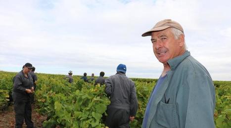 Premières vendanges depuis ce matin dans le Vignoble nantais | Le vin quotidien | Scoop.it