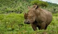 Saving the rhino with surveillance drones - The Guardian   Surveillance Studies   Scoop.it