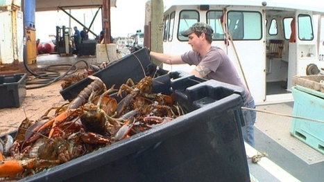 Nova Scotia lobster has another way to reach Europe and Asia | Nova Scotia Fishing | Scoop.it