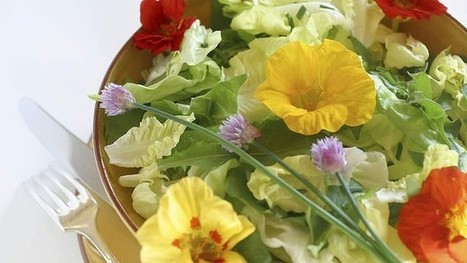 Edible spring flowers for Canberra gardens - Good Food | edible landscaping | Scoop.it
