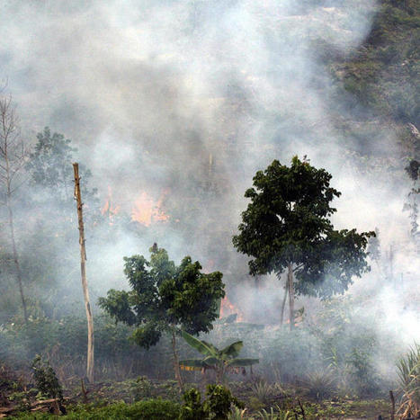 Indonesia Is Killing the Planet for Palm Oil | VICE News | Sustain Our Earth | Scoop.it
