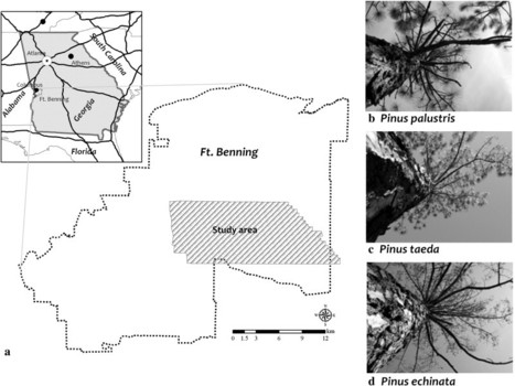 Using hyperspectral remote sensing to detect and quantify southeastern pine senescence effects in red-cockaded woodpecker (Picoides borealis) habitat | Remote Sensing - Vegetation Classification & Condition | Scoop.it