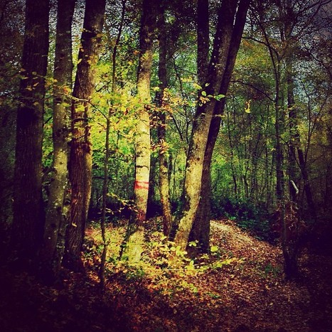 A Forest Good Morning by Seb Gordon | MobilePhotography | Scoop.it