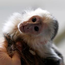Star Accused of 'Cruelty': Animal Lovers Blast Bieber for Pet Monkey | Animals R Us | Scoop.it