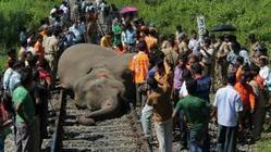 Trein India botst op kudde olifanten | India | Scoop.it