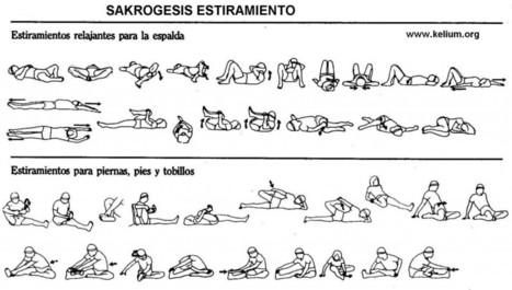 El Estiramiento. La clave para mantenerte flexible | Actividad Física y Salud | Educación Física-Prof. Facundo | Scoop.it