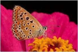 Las diferencias entre cuento y película: La lengua de las mariposas   catadepe   Scoop.it