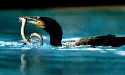 Le Cher : une rivière polluée pour les poissons gras | Toxique, soyons vigilant ! | Scoop.it