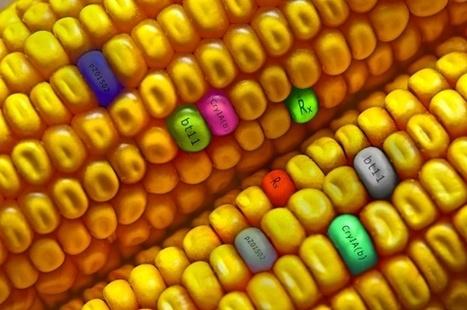 Use these five natural substances to detox your body of toxic GMO foods | Paz y bienestar interior para un Mundo Mejor | Scoop.it