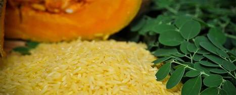 IRRI - Golden Rice   Year 10 Biology - Genetics   Scoop.it
