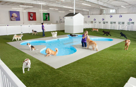 JFK Airport's New All-Animal Terminal Is Ahead Of The Pack | Xposed | Scoop.it