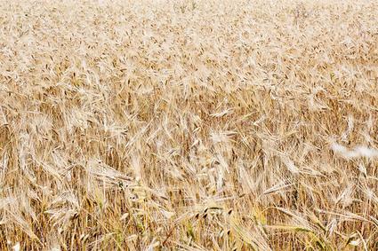 Les paysans : de nouveaux criminels et appel à les dénoncer | Questions de développement ... | Scoop.it