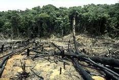 Pérdida de biodiversidad, consecuencia de la deforestacion | Ecologismo | Cambio climático | Scoop.it