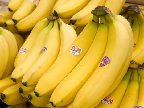 Bananageddon: Millions face hunger as deadly fungus Panama disease decimates global banana crop | Viruses and Bioinformatics from Virology.uvic.ca | Scoop.it